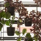green racks pot plants