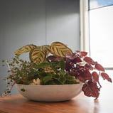 Living Foliage Bowl