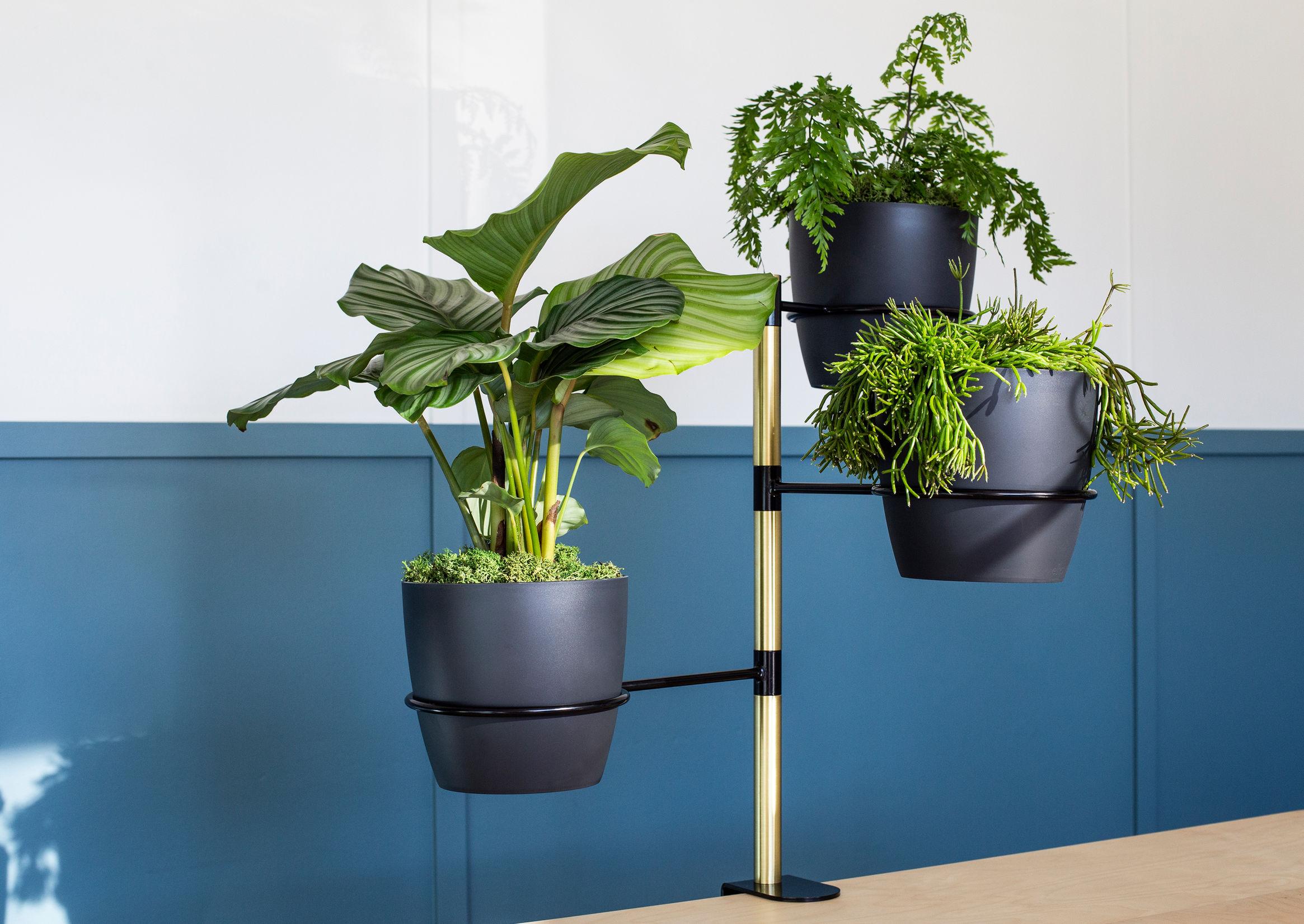 Plant orbit 9-0-2344-0-1652