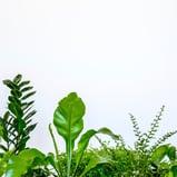 Healthy Foliage