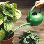 plantwatering.jpg